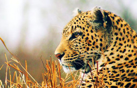 best-places-to-stay-in-the-kruger-national-park